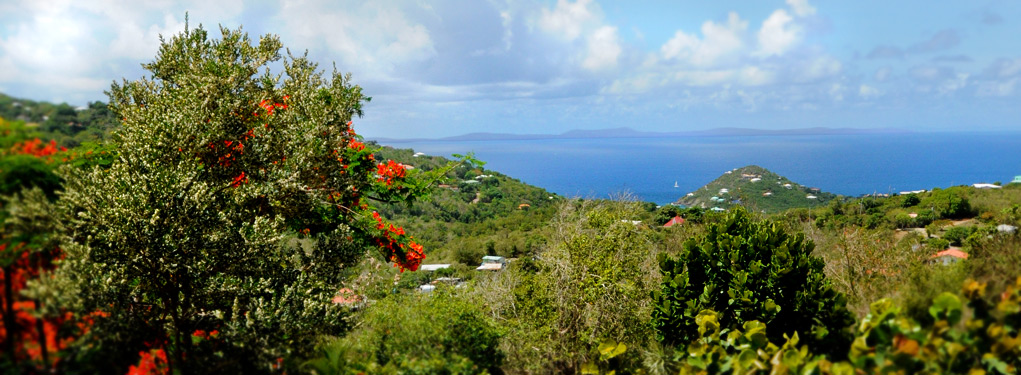 The view of the West Shore of St. John, USVI